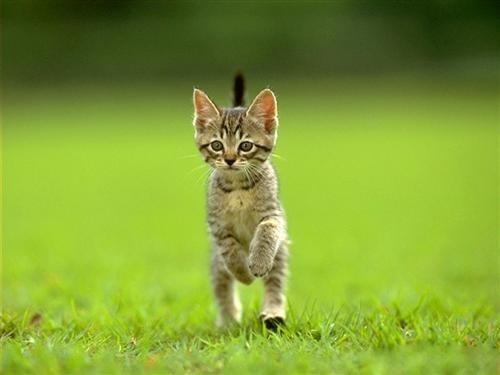 chaton-joueur.jpg