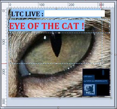 logo ltc live eye of the cat.JPG