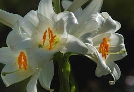 le mois de mai,c'est le mois dédié à la vierge marie,la place saint-pierre de rome,était noire de monde dimanche 27 avril pour la canonisation,de jean paul ii et jean xxiii,le pape françois,la croix. »,joyeuses pâques,la semaine saitne,apothéose du carÊme : le cheminement de la semaine sainte,vers pâques,pâques,la semaine sainte,le chemin de croix,la passion,la croix,la résurrection,seigneur,notre père,jésus,jésus-christ,la vierge marie,saint-joseph,la trinité,jean dorval,jean dorval pour ltc religion,catholicisme,catholicisme éclairé,ltc religion,france,catholique et français toujours,carême 2014,conférences de carême,cathédrales de metz,moselle,lorraine,éloges de l'épreuve,retraite dans la ville,sainte-thérèse de l'enfant jésus,se préparer à pâques,pâques 2014,sainteté et amour de dieu,le mois de mars,c'est le mois de saint-joseph !,historique de la fête de saint-joseph,yannikbonnet.com,historique de la fête de saint joseph