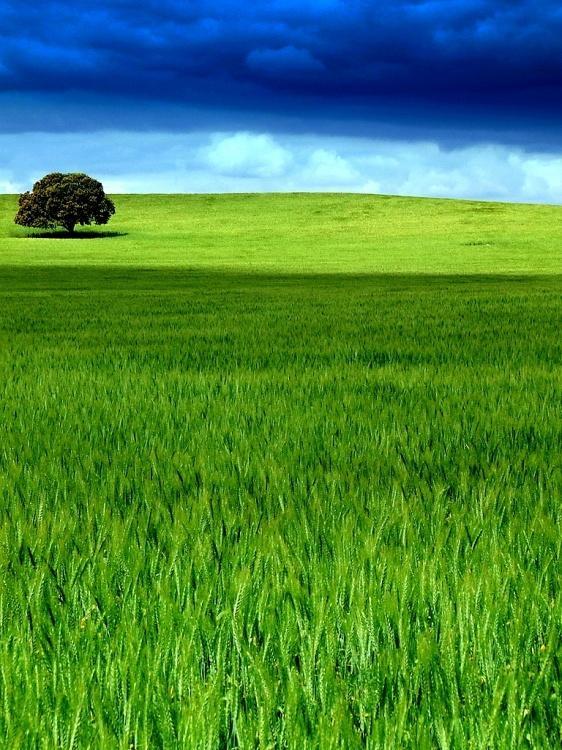 Ltc la tour camoufle la lorraine au coeur du monde for Paysage vert