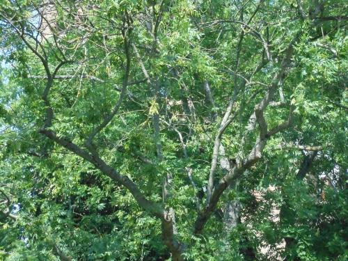 poésie dédiée aux arbres,à la forêt,aux plantes,à nos plus longues racines,à notre plus longue mémoire