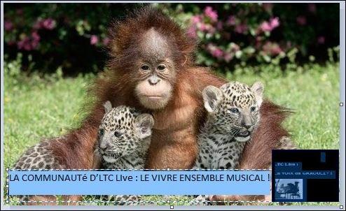logo ltc live vivre ensemble musical.JPG