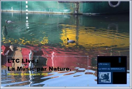 ltc live MAF 1.JPG