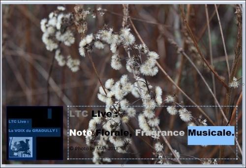 ltc live note florale 2.JPG