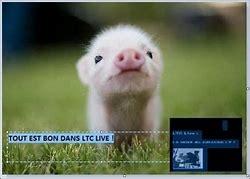 ltc live cochon.jpg
