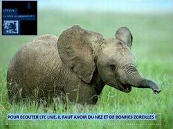 ltc live elephant.jpg