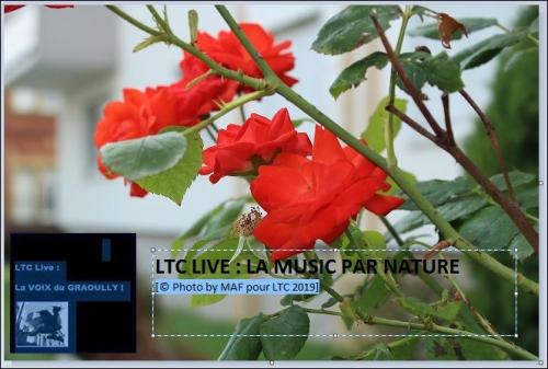 ltc nature 1.JPG