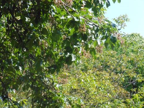 poésie dédiée aux arbres,à la forêt,à nos plus longues racines