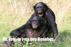 ltc live la voix des  bononos.jpg