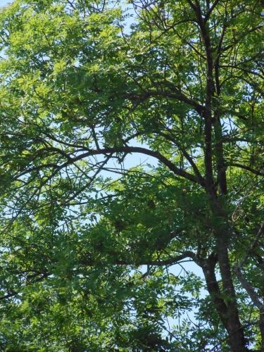 Poésie dédiée aux arbres, à la forêt, aux plantes, à nos plus longues racines, à notre plus longue mémoire,