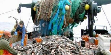 """dire non à la """"pêche au bulldozer"""",c'est laisser (enfin) respirer les océans"""