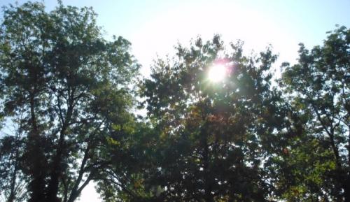 """""""a mon petit bois"""",jean-françois ducis,le répubicain lorrain,""""la fille de l'ambre."""",""""la pause nue."""",""""papillon de nuit."""",irène bedard,undercurrent,à ma muse amérindienne,« le chant de sanaa. »,poésie,inspiré de la poésie humaynî du yémen,mais en vers libres,tihāma,yémen,femme yéménite,évidence,la rose mauve,une hirondelle fait mon printemps,melin de saint-gelais,poésie renaissance,renaissance,joachim du bellay,danse avec moi cette nuit,ltc,la tour camoufle,jean dorval,jean dorval pour ltc,coupe du monde de football,amour,romantisme,centre pompidou-met"""