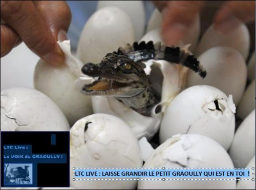 ltc live croco.JPG
