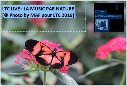 ltc nature 4.JPG