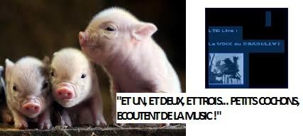 ltc petits cochons 1.jpg