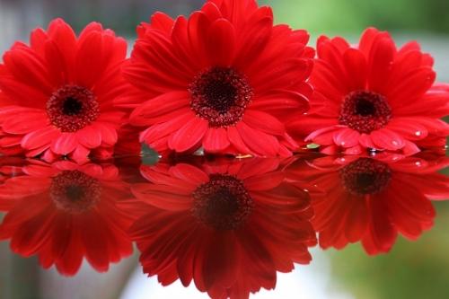 mélanie laurent,les joueurs, l'aigle est la proie, ouché-coulé !, l et elle : ils !, nuits d'Échine, le sms, à demain mon amour, a petite fleur Écarlate, ou la première nuit de psyché et d'Éros, 'anneau sacré, ltc poésie : le serment du silence, jean dorval pour ltc poésie, ltc poésie, jean dorval, poète lorrain, ltc poésie : hommage à l'amitié et à la fraternité, le passage, jean bereski-laurent, jd en dédicace, le re-retour !, ltc poésie : carte blanche à jean dorval, metz : un carnet de voyage marocain signé jean dorval, l., l'extase d'un baiser, françois tristan l'hermite, les bienfaits du baiser, songer, vivre et croire, au carrefour des sens, la colombe et le faune, défiition marron, le photographe, christian hoffmann, metz - médiathèque du sablon : les meilleurs vieux à l'honneur, tania mouraud, une rétrospective, du 4 mars au 5 octobre 2015, au centre pompidou-metz, by jd, bientôt... très bientôt... un reportage sur la rétrospective sur, et un interview de tania, signés jd, le programme du centre pompidou-metz, 2015, vitrine éphémère, collectif d'artistes, artisans, créatifs, et passionnés, wi-fille
