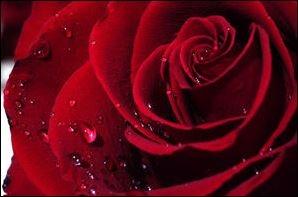 La Fille de Vénus,elle-lie, l'empreinte de son t-shirt, e baiser, les maux d'elle, vox pin-up, l'anneau sacré, ltc poésie : le serment du silence, jean dorval pour ltc poésie, ltc poésie, jean dorval, poète lorrain, ltc poésie : hommage à l'amitié et à la fraternité, le passage, jean bereski-laurent, jd en dédicace, le re-retour !, ltc poésie : carte blanche à jean dorval, metz : un carnet de voyage marocain signé jean dorval, l., l'extase d'un baiser, françois tristan l'hermite, les bienfaits du baiser, songer, vivre et croire, au carrefour des sens, la colombe et le faune, défiition marron, le photographe, christian hoffmann, metz - médiathèque du sablon : les meilleurs vieux à l'honneur, tania mouraud, une rétrospective, du 4 mars au 5 octobre 2015, au centre pompidou-metz, by jd, bientôt... très bientôt... un reportage sur la rétrospective sur, et un interview de tania, signés jd, le programme du centre pompidou-metz
