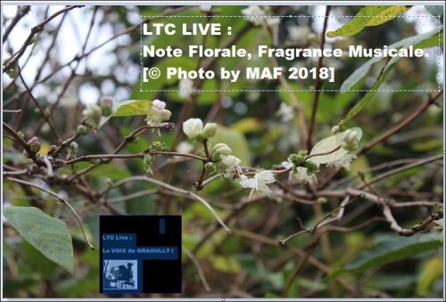 ltc live note florale 4.JPG