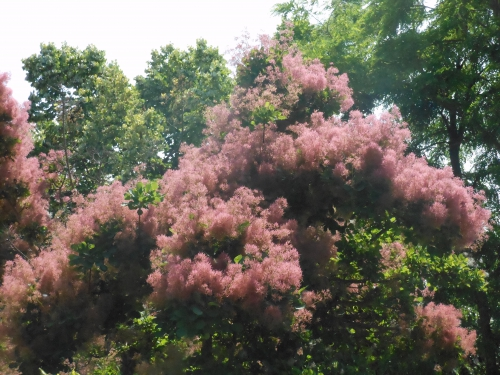 Poésie dédiée aux arbres, à la forêt, aux plantes, à nos plus longues racines,