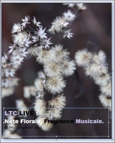 ltc live note florale.JPG
