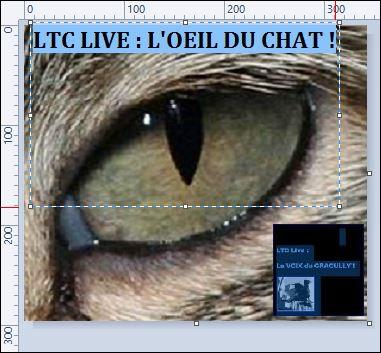 LTC LIVE : L'OEIL DU CHAT !,