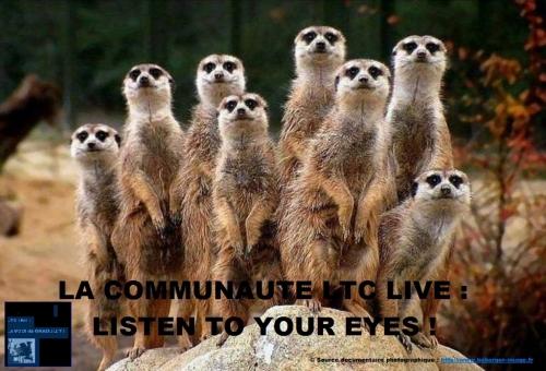 ltc live la communauté d'ltc live.jpeg