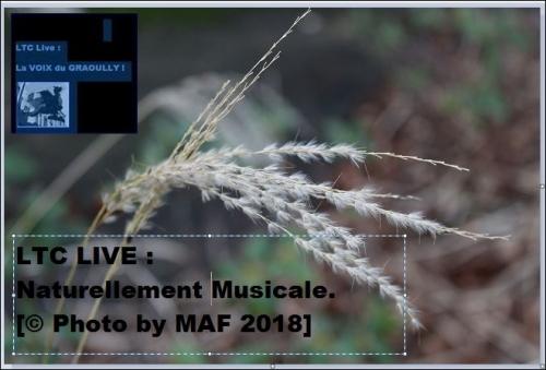 ltc live naturellement musicale.JPG
