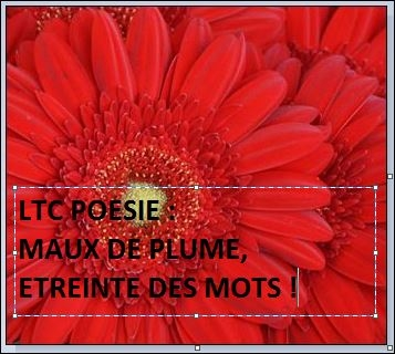 """association de, la maison du pays des Étangs, jacques nimserns, jean dorval en dédicace, le semeur de sentiments, le temps n'a plus d'importance, une rencontre d'edilivre, avec jean dorval, auteur du recueil de poésie : """"le semeur de sentiments."""", ltc poésie annonce : hommage parisien au poète paul verlaine, les amis de verlian, association, la maison de verlaine, metz, sara-bande marocaine, ltc poésie rend hommage à, charles marie rené leconte de lisle, sara-fleur, prélude à sara, le serment à sara, un baiser pour sara, jean dorval, sara ou les nuits d'été, jean dorval pour ltc poésie, jean dorval poète lorrain, poésie lorraine, poésie, cupidon me sert le thé, amour, romantisme, centre pompidou-metz, moselle, lorraine, france, ue, union européenne, europe, art écrit, écriture, thé oriental, saint-valentin, érotisme, sensualité, les jambes, d'une femme, fémininité, le nu"""