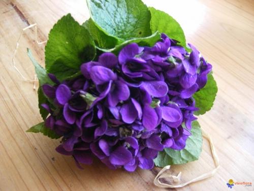 l'amour est un bouquet de violettes,luis mariano,violetta,jean dorval pour ltc,lorraine,saint-valentin