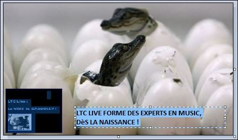 ltc live petit graoully.JPG