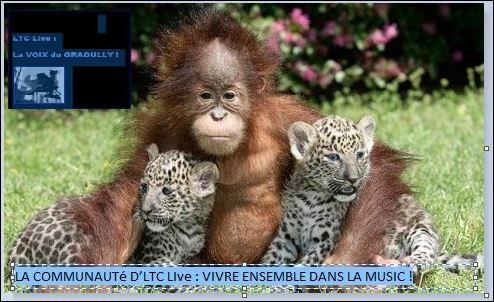 la communauté d'ltc live : vivre ensemble dans la music !,ltc live : au commencement était la music !,duran duran,simple minds,nec,stephan eicher,talk talk,omd,angel at my table,aamt,michel sardou,je vais t'aimer,1976,pretty woman,it must have been love,your song,theme from moulin rouge,édith piaf,l'hymne à l'amour,étienne daho,ouverture,roxy music,jealus guy,mike brant,laisse-moi t'aimer,la minute lovelove d'ltc live,envoyer cette note | tags : ltc live : l'instant love-love,faites de la musique pas la guerre,ltc,la communauté d'ltc live : avoir les déci-belles en partage !,new gold dream,t in the park,les droits des personnes handicapées,la france,la france sociale,jean dorval pour ltc live,jd,latourcamoufle,la tour camoufle,musik,zizik,social,anti sarko,la fin du monde,le mim social tour d'ltc live