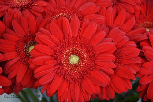 la lectrice,à demain mon amour,a petite fleur Écarlate,ou la première nuit de psyché et d'Éros,'anneau sacré,ltc poésie : le serment du silence,jean dorval pour ltc poésie,ltc poésie,jean dorval,poète lorrain,ltc poésie : hommage à l'amitié et à la fraternité,le passage,jean bereski-laurent,jd en dédicace,le re-retour !,ltc poésie : carte blanche à jean dorval,metz : un carnet de voyage marocain signé jean dorval,l.,l'extase d'un baiser,françois tristan l'hermite,les bienfaits du baiser,songer,vivre et croire,au carrefour des sens,la colombe et le faune,défiition marron,le photographe,christian hoffmann,metz - médiathèque du sablon : les meilleurs vieux à l'honneur,tania mouraud,une rétrospective,du 4 mars au 5 octobre 2015,au centre pompidou-metz,by jd,bientôt... très bientôt... un reportage sur la rétrospective sur,et un interview de tania,signés jd,le programme du centre pompidou-metz,2015,vitrine éphémère,collectif d'artistes,artisans,créatifs,et passionnés,vous invite,vernissage,vendredi 03 octobre 2014,à partir de 17h00,la magicienne susanna fritscher fait des bulles de cristal,au cpm